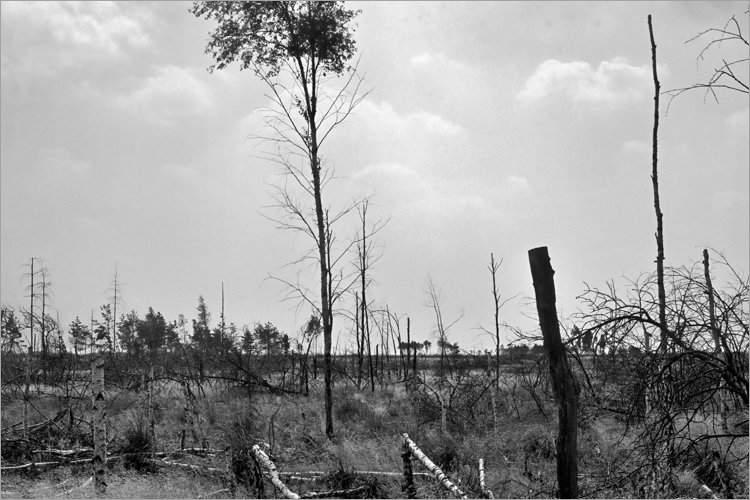 »Abgebrantes Waldstück bei Schnackenburg«, aus dem Portfolio »Bilder einer Ausstellung – Versuch einer Rekonstruktion«, Foto © Friedhelm Denkeler 1979