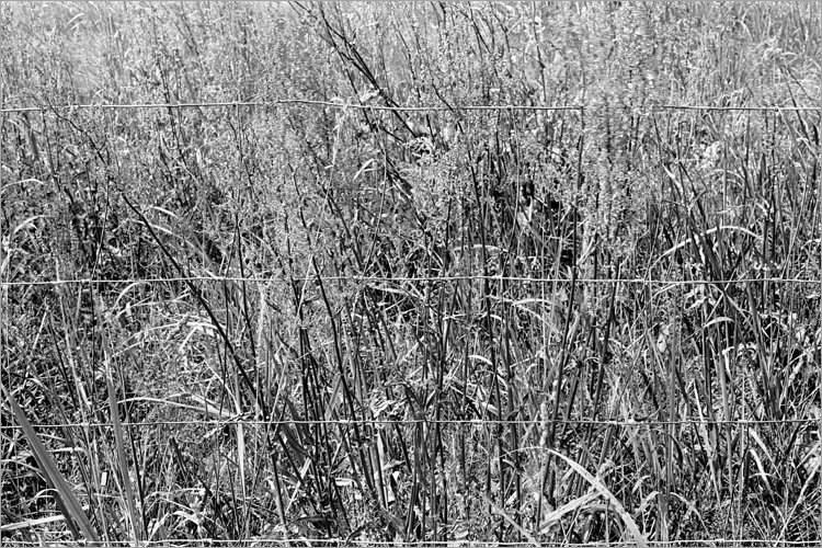 »Sommerwiese in Schnackenburg», aus dem Portfolio »Bilder einer Ausstellung – Versuch einer Rekonstruktion«, Foto © Friedhelm Denkeler 1979