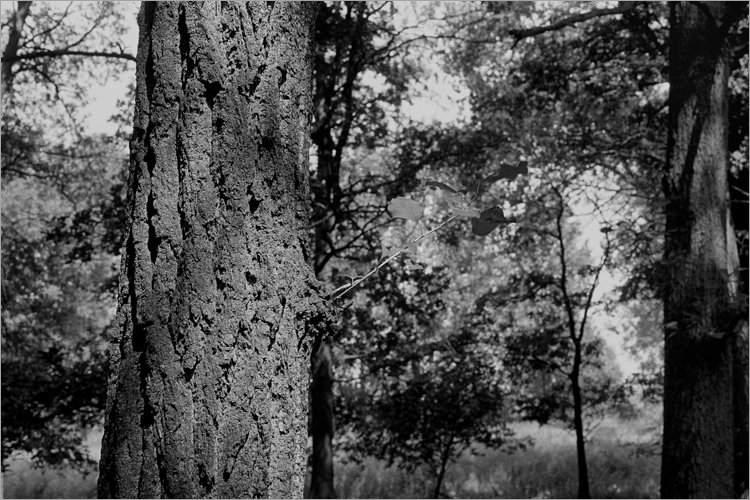 »Junger Trieb«, aus dem Portfolio »Bilder einer Ausstellung – Versuch einer Rekonstruktion«, Foto © Friedhelm Denkeler 1979