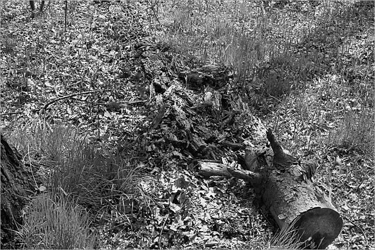 »Artaxs Tod«, aus der Serie »Der Elmgeist«, Foto © Friedhelm Denkeler 1980