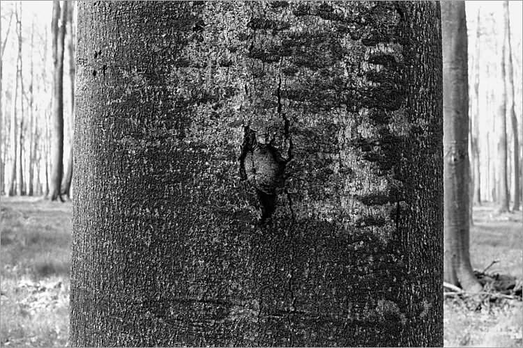 »Versuch eines Durchbruches«, aus der Serie »Der Elmgeist«, Foto © Friedhelm Denkeler 1980