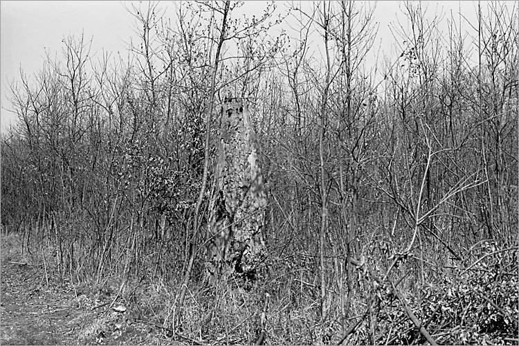 »Elmgeist I«, aus der Serie »Der Elmgeist«, Foto © Friedhelm Denkeler 1980