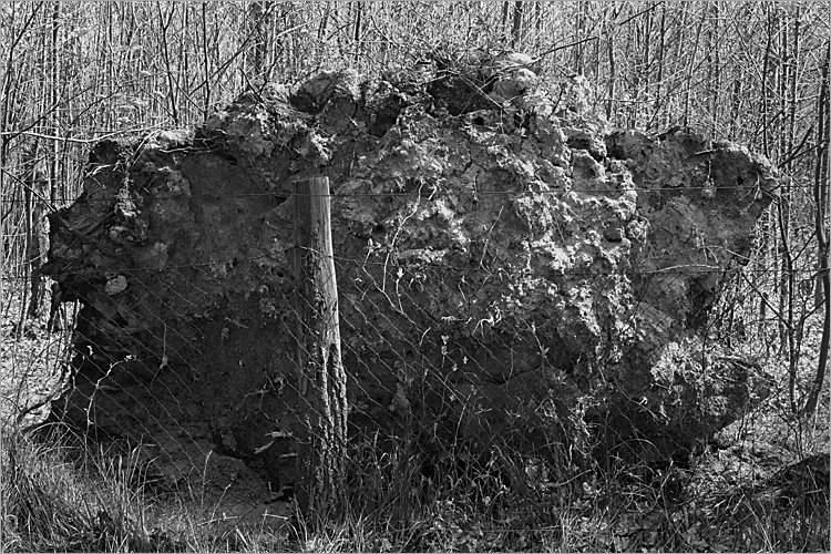 »Ein Baum von unten«, aus der Serie »Der Elmgeist«, Foto © Friedhelm Denkeler 1980