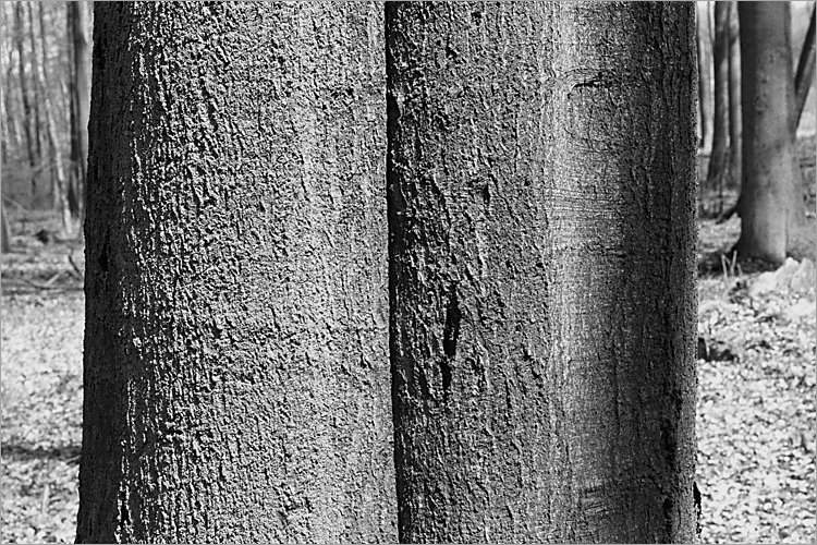 »Siamesische Zwillinge I«, aus der Serie »Der Elmgeist«, Foto © Friedhelm Denkeler 1980