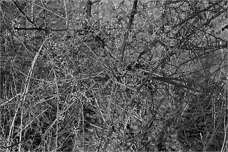 »Frühling im Elm II«, aus der Serie »Der Elmgeist«, Foto © Friedhelm Denkeler 1980