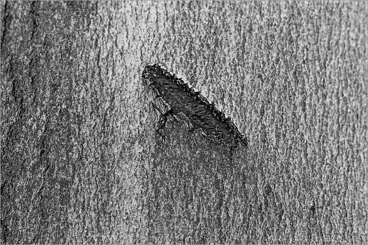 »Kainsmal I«, aus der Serie »Der Elmgeist«, Foto © Friedhelm Denkeler 1980
