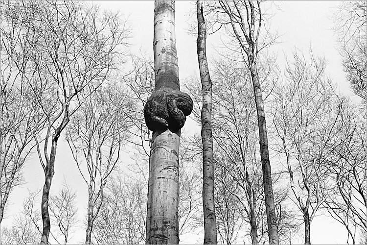 »Der Baumalb II«, aus der Serie »Der Elmgeist«, Foto © Friedhelm Denkeler 1980