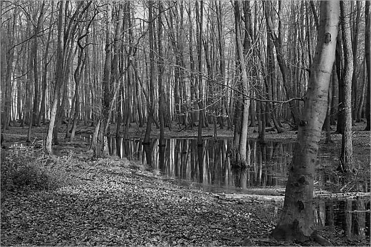 »Der Sumpf der Traurigkeit«, Erdfall im Elm, aus der Serie »Der Elmgeist«, Foto © Friedhelm Denkeler 1980