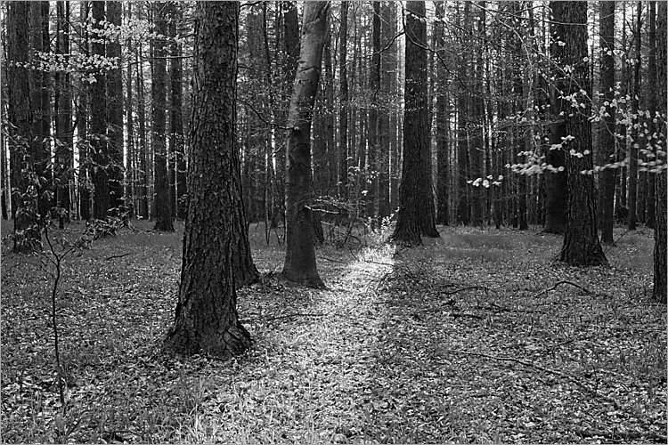 »Ein Lichtblick«, aus der Serie »Der Elmgeist«, Foto © Friedhelm Denkeler 1980