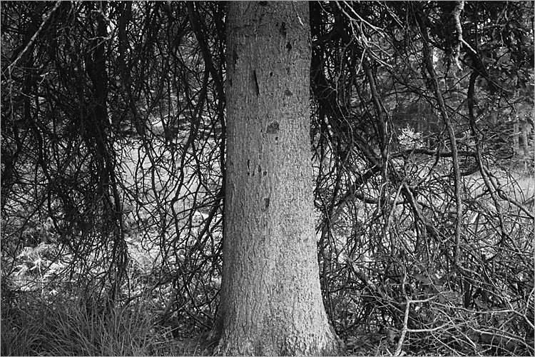 »Unter dem Schutz des Baumes I«, aus der Serie »Der Elmgeist«, Foto © Friedhelm Denkeler 1980