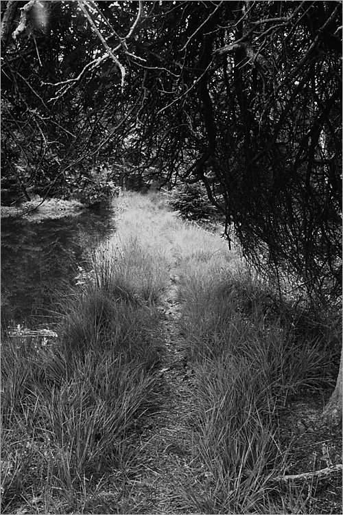 »Der Weg des Elmgeistes II«, aus der Serie »Der Elmgeist«, Foto © Friedhelm Denkeler 1980