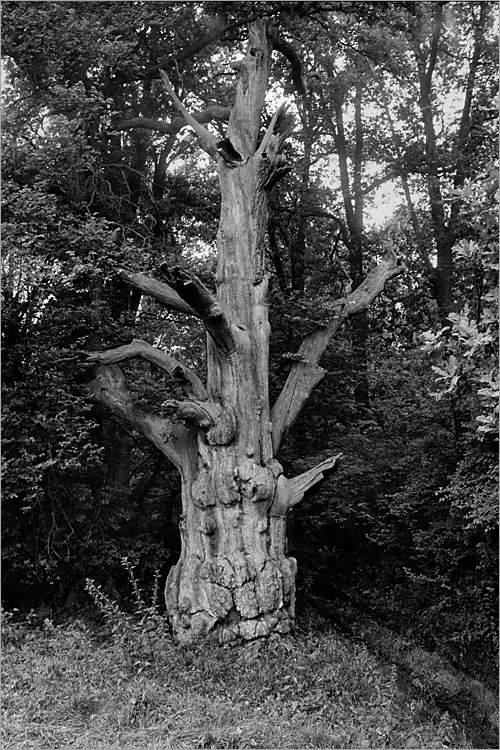 »Alter Geist I«, aus der Serie »Der Elmgeist«, Foto © Friedhelm Denkeler 1980