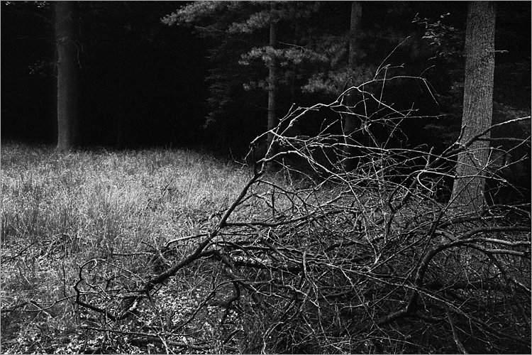 »Im Haulewald«, aus der Serie »Der Elmgeist«, Foto © Friedhelm Denkeler 1980