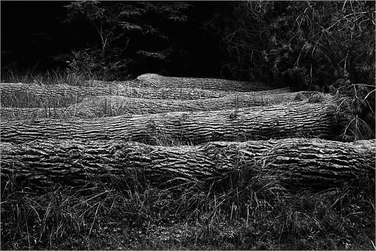 »Fünf Schlafende«, aus der Serie »Der Elmgeist«, Foto © Friedhelm Denkeler 1980