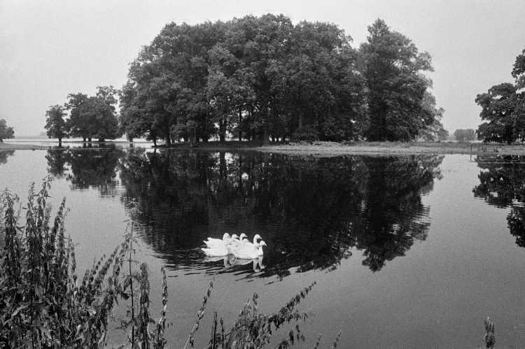 »Elbtalaue«, Schnackenburg, aus dem Portfolio »Harmonie eines Augenblicks«, Foto © Friedhelm Denkeler 1980
