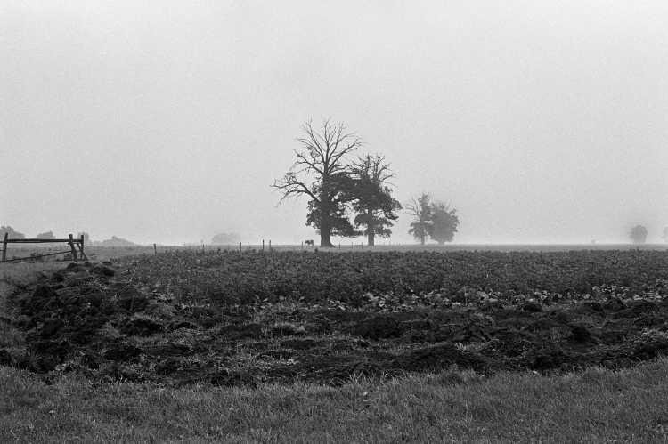 »Horizont mit Kuh«, Westfalen, aus dem Portfolio »Harmonie eines Augenblicks«, Foto © Friedhelm Denkeler 1978