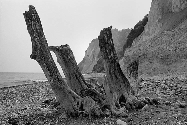 »Versteinerte Baumgruppe«, aus dem Portfolio »Møns Klint«, Foto © Friedhelm Denkeler 1983