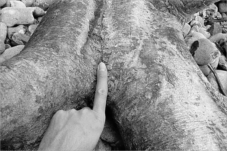 »Tactus«, aus dem Portfolio »Møns Klint«, Foto © Friedhelm Denkeler 1983