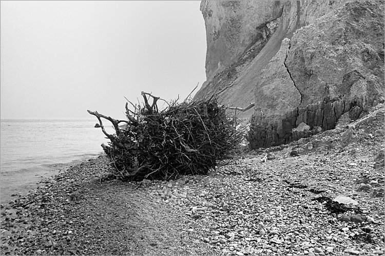 »Flüchtendes Wurzelwerk«, aus dem Portfolio »Møns Klint«, Foto © Friedhelm Denkeler 1983