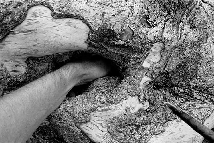 »Gefährlicher Eingriff«, aus dem Portfolio »Møns Klint«, Foto © Friedhelm Denkeler 1983