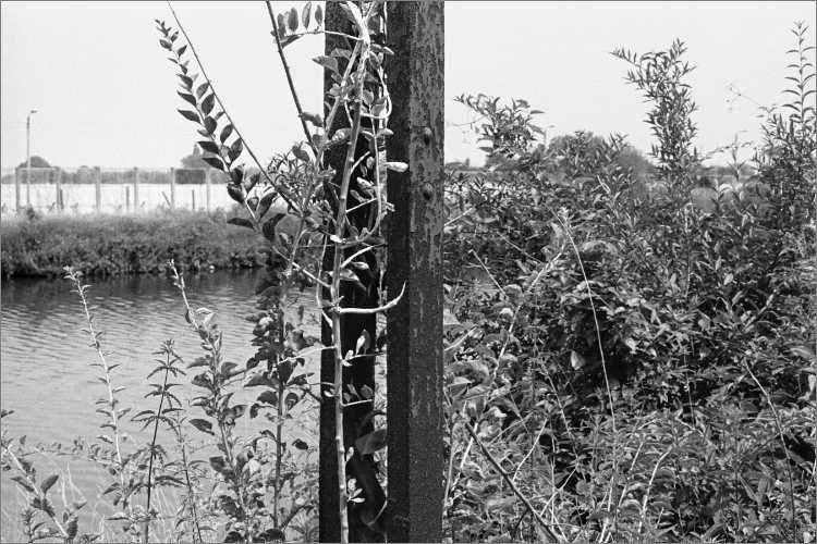 »Stählerner Stützpfosten«, Landwehrkanal, , Foto © Friedhelm Denkeler 1981