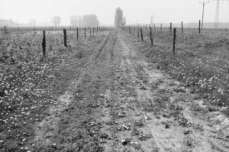 »Der Butterblumenweg am frühen Morgen«, aus dem Portfolio »Sommer in einer Hand«, Foto © Friedhelm Denkeler 1985