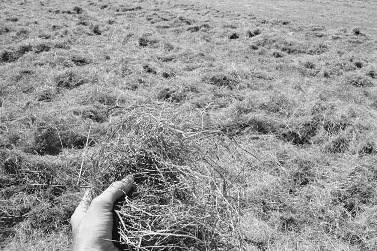 »Ein irrer Duft von frischem Heu«, aus dem Portfolio »Sommer in einer Hand«, Foto © Friedhelm Denkeler 1985