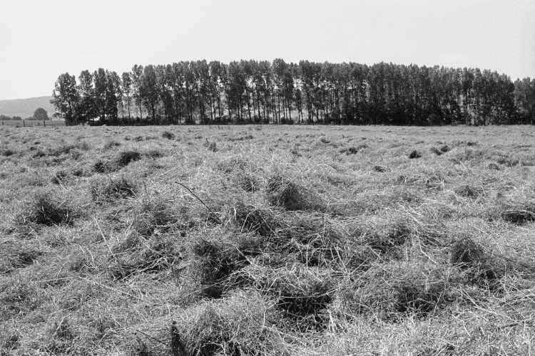 »Kurz vor der Heuernte«, aus dem Portfolio »Sommer in einer Hand«, Foto © Friedhelm Denkeler 1985
