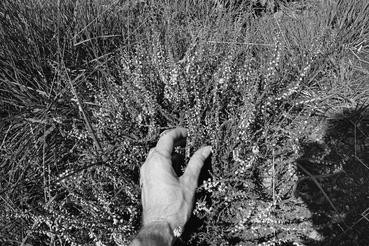 »Sommerheide«, aus dem Portfolio »Sommer in einer Hand«, Foto © Friedhelm Denkeler 1985