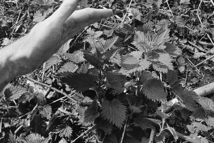 »Vorsicht! Brennnessel«, aus dem Portfolio »Sommer in einer Hand«, Foto © Friedhelm Denkeler 1985