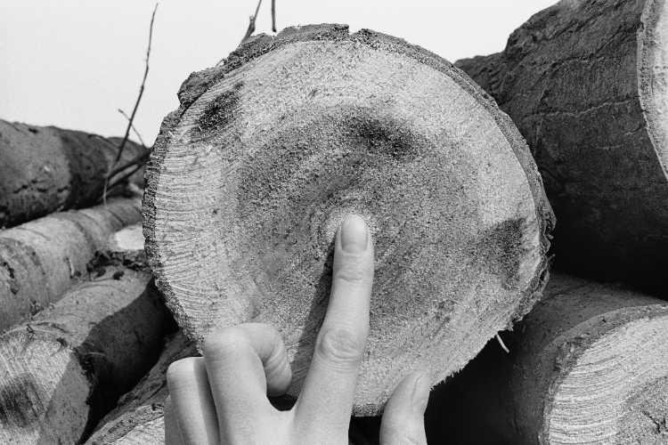 »Jahresringe«, aus dem Portfolio »Sommer in einer Hand«, Foto © Friedhelm Denkeler 1985