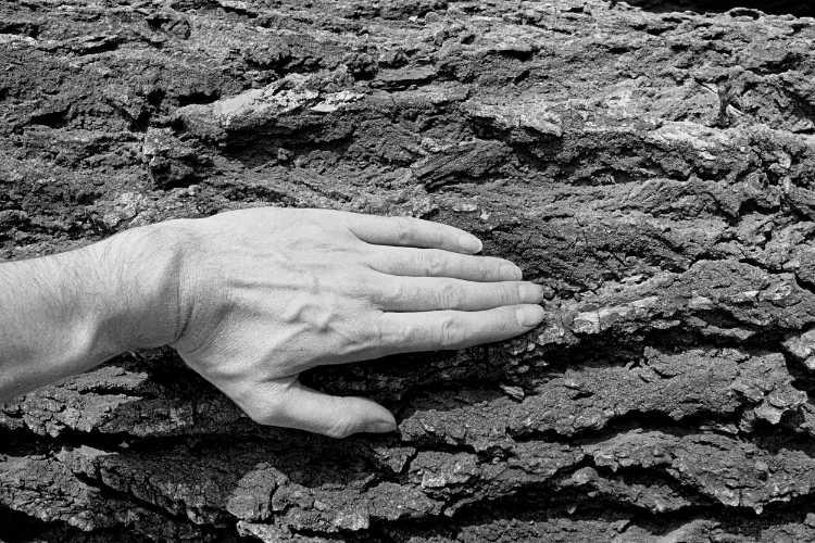 »Die Borke des Baumes«, aus dem Portfolio »Sommer in einer Hand«, Foto © Friedhelm Denkeler 1985