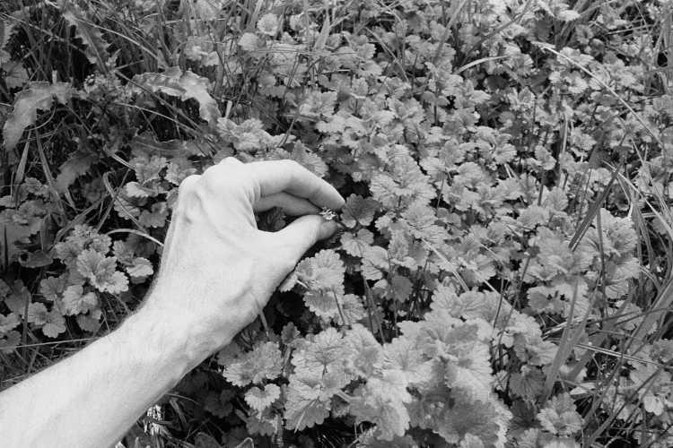 »Winzling«, aus dem Portfolio »Sommer in einer Hand«, Foto © Friedhelm Denkeler 1985