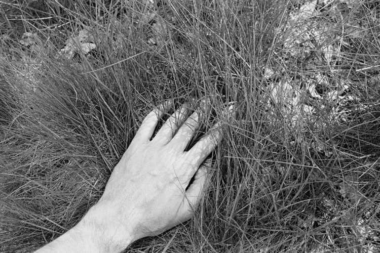 »Grasbüschel«, aus dem Portfolio »Sommer in einer Hand«, Foto © Friedhelm Denkeler 1985