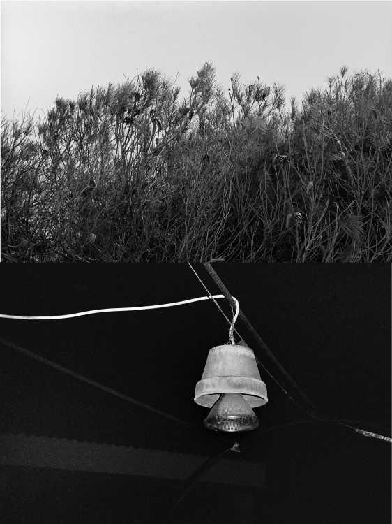 Aus dem Portfolio »Eine Mallorquinische Nacht« (Zapfenhecke/ Blumentopflampe), Foto © Friedhelm Denkeler 1993