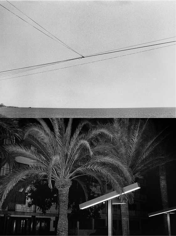 Aus dem Portfolio »Eine Mallorquinische Nacht« (Himmelsdrähte/ Palmenbeleuchtung), Foto © Friedhelm Denkeler 1993