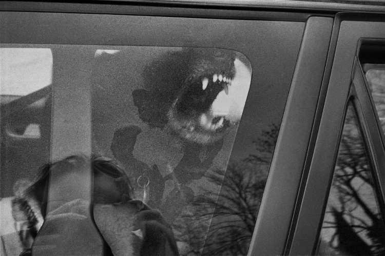 »Gefährliches Spiel» oder: »Furchtlos näherte sich der Fotograf dem zähnefletschenden Ungeheuer«, Fehrbellin-Dechtow (Gutshaus Dechtow), Berlin, aus dem Portfolio »Schatten und Spiegel», Selbstbildnisse 1976 bis 2020, Foto © Friedhelm Denkeler 1996