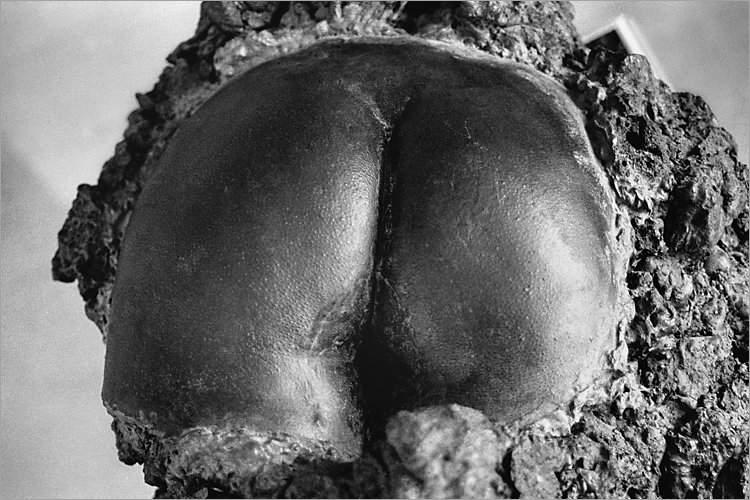 Aus dem Portfolio »Macht zuviel Sex verrückt?«, Kapitel 1: »Im Lustgarten«, Foto © Friedhelm Denkeler, 1996