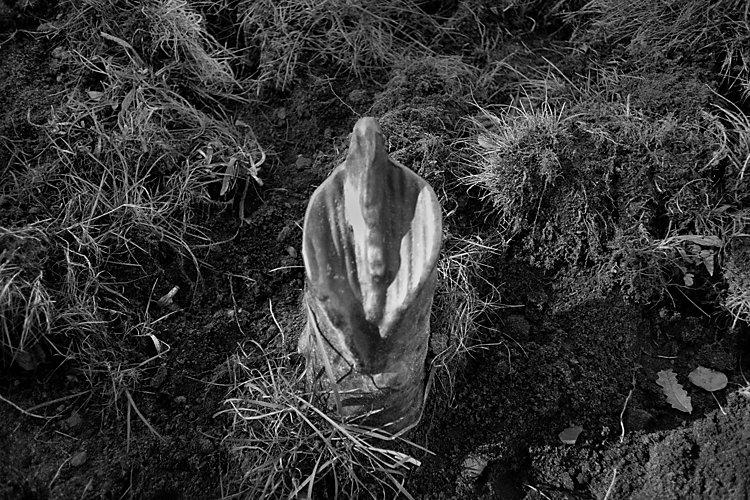 Aus dem Portfolio »Macht zuviel Sex verrückt?«, Kapitel 8: »Schamkrabben«, Foto © Friedhelm Denkeler, 2003