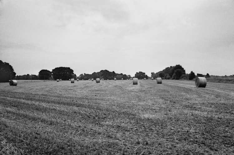 »Feld bei der Bockwindmühle in Wehe«, Foto © Friedhelm Denkeler 2003
