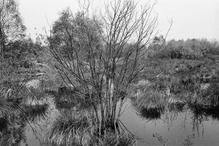»Das Große Torfmoor bei Lübbecke/ Hille«, Foto © Friedhelm Denkeler 1985